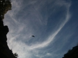 bird, swirling clouds, roundness