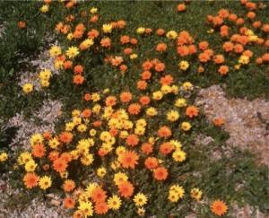 wildflowers spring