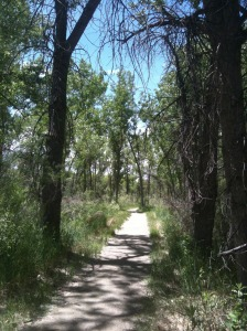 hiking trail in colorado