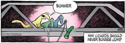 funny-lizard-bungee-jump
