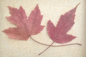 Autumn leaves. (NOT pumpkin spiced)