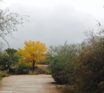Rainy skies, golden trees, no people. Perfect.