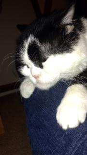 Cat Shaking After Applying Flea
